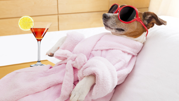 Dog relaxing at a spa with a drink